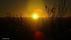 Samenkapseln eines Wstenstrauches // Sonnenaufgang in der Namib (seyf\ART) Tags: pflanzen namibia gegenlicht