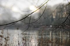 rain drops (Frau Koriander) Tags: winter seascape nature water weather lensbaby river landscape drops wasser dof hessen bokeh natur shift raindrops tilt fluss rhine landschaft rhein treebranches wetter tropfen tiltshift regentropfen trebur geäst langenau astheim nikond300s lensbabycomposerpro lensbabyedge80