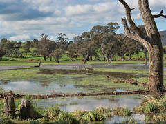 After the rain (1) (dicktay2000) Tags: australia crowther richardtaylor bendickmurrell newsouthwales au