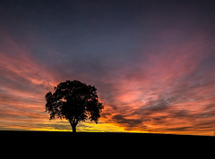 Daybreak at the lonely oak (grbush) Tags: tree lonetree minimalism silhouette dawn daybreak sunrise bedfordshire countryside sky redsky reddawn solitude landscape lumix lumixg panasonic g3 olympusm918mm olympus