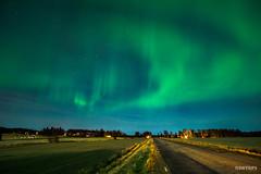 Aurora over Lovanger (2) - Lovanger, Sweden.jpg (SWTRIPS) Tags: scandinavia aurora sweden night photography long exposure roadtrip lovanger swtrips longexposure nightphotography