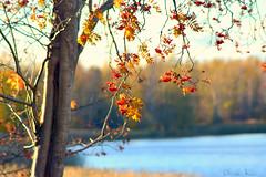 This is Finland. (nyomee wallen) Tags: finlandia thisisfinland op26 finnishcomposerjeansibelius finnish composer jean sibelius forest finnisheveningsun finlandasisee suomi