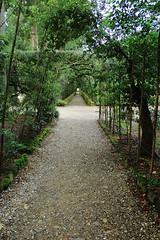Sempre dritto. (Federica Zampaolo) Tags: giardino green boboli firenze verde aperto
