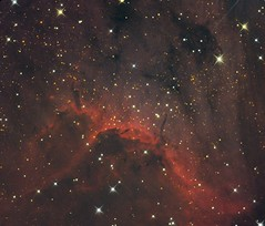 The Pelican Nebula (Crop) (Matthi900) Tags: ic5070 ic 5070 nebula stars star red dust cloud deepsky deep sky universe space astrophotography astronomy guided telescope canon dslr long exposure dark night skynight nightsky