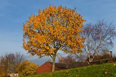 (JOAO DE BARROS) Tags: barros joo botany tree