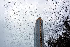 Gli storni e il Pirellone (STE) Tags: milano milan storni starlings uccelli birds stormo flock pirellone building cielo sky stazione centrale central station sony rx100 volo flying