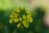 20160924_Cinq_Sens_Yvoire (6 sur 13) (calace74) Tags: fleurs macro jardinsdes5sens yvoire rhonealpes foretderipaille hautesavoie nature panorama thononlesbains