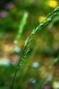 drops of dew 2 (dibattista) Tags: gocce rugiada bosco forest campigna emilia romagna drops dew