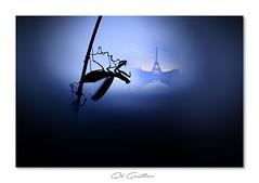 Freddy les griffes de Paris ;-) (Gil Gautier @GilGPhotographie) Tags: gilgphotographie gilgautier nikon d700 180mm macro sigma bleu blue mante mantis