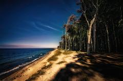 Ghost forest (Der Hamlet) Tags: ghostforest gespensterwald ostsee balticsea germany mecklenburgvorpommern strand beach sunset sonnenuntergang coast kste