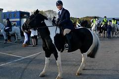 Pre parade photo (napoleon666uk) Tags: liverpool international horse festival liverpoolinternationalhorsefestival horseshow echoarena animal parade