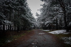 ... (Kosmi88) Tags: poland nikon nikond60 forest las śnieg snow winter listopad november sesons outdoor creepy dark