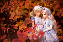 the best kind of story (koroa) Tags: daydream coco sally bjd msd lolita autumn 50mm zeiss
