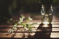 Autumn's gift (Tammy Schild) Tags: 35mm sigma flowers daisies autumn fall table vase nature light shadows