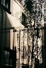 no title (biancarosa.looman) Tags: analog outside handheld reflection fence nophotoshop canoneos500