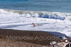 Mi príncipe posa para mí  #curro #2014 #desembocaduradelguadalhorce #málaga #andalucía #españa #spain #costadelsol #mar #sea #mediterráneo #perro #dog #cocker #cockerspaniel #animal #miprincipe #love #naturaleza #nature #senderismo #trecking #paisaje #lan (Manuela Aguadero) Tags: mediterráneo desembocaduradelguadalhorce españa paisaje landscape senderismo photography spain cocker love miprincipe sonya350 nature sonyalpha trecking photographer mar curro naturaleza animal sonyalpha350 2014 sea perro cockerspaniel andalucía dog málaga alpha350 costadelsol