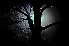 black tree (Cleide@.) Tags:  cleide brazil 2016 photo art digital ps6 texture filters dark tree lights artdigital exotic netartii sotn awardtree
