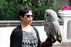 Wise (Chris Rouch) Tags: 28th birds joy czechia prague hradany owls