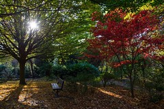 Sunlight...... (klythawk) Tags: autumn nature bench leaves colour sunlight sunstar green red yellow brown black white nikon d610 24120mm woodthorpepark nottingham klythawk