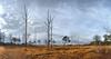 Kampina #4 (Bart K. Prins) Tags: panasonic lumix dmclx7 kampina netherlands panorama