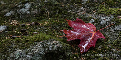 Autumn's Started (Outdoorjive) Tags: dropbox autumn usa flikr northamerica canada desktop other places newengland