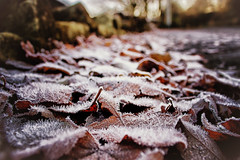 A Cold & Frosty Morning (Missy Jussy) Tags: frost cold morning leaves ground path footpath autumn bokeh sunlight canon cannon600d canon1855 ogden newhey rochdale landscape lancashire england unitedkingdom
