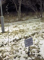 Alley of heroes, cosmonaut hotel (Brigitte Bailleul) Tags: baikonur kazakhstan cosmonaut hero ms03tweetup