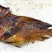 Aploactinidae