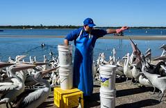 One for You (Jocey K) Tags: sky seagulls pelicans water birds river labrador shadows australia queensland surfersparadise goldcoast triptoqueenslandbrisbane feedingtimepeople