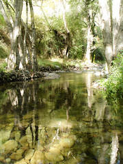Nature reflections (msiapan) Tags: bridge trees water reflections pond cyprus venetian paphos    tzelefos