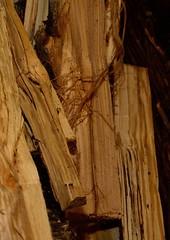 Kaminholz (Cathrine1) Tags: wood brown braun holz