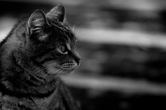 sassy (grafficartistg4) Tags: camera grass leaves oregon cat canon ir leaf feline unitedstates infrared week monday foilage digitalrebelxt lincolncity 70200mm weekday 200mm 70mm 720nm lifepixel irconversion infraredconversion f432 irlight infraredlight infraredmodification irmodification