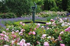 Borde HIll Gardens - Sussex (Mark Wordy) Tags: fountain westsussex rosa rosegarden bordehillgarden