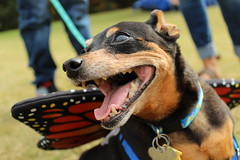 """Dogs, dog park, richmond • <a style=""""font-size:0.8em;"""" href=""""http://www.flickr.com/photos/31682982@N03/22497985296/"""" target=""""_blank"""">View on Flickr</a>"""