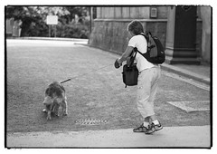 Dog Walking (Eline Lyng) Tags: leica dog dogwalk animal people street streetphotography norway oslo bygdøy museum littledoglaughedstories littledoglaughednoiret leicas s 007 mediumformat monochrom bw blackandwhite thenorwegianmuseumofculturalhistory pet golden retriever goldenretriever summicrons100mm 100mm summicron leicalens dof