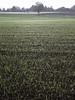 Spider silk (stanzebla - work, eat, sleep) Tags: landscape landschaft spidersilk