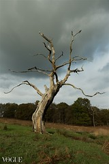 Richmond Park (stefanopad82) Tags: park cloud tree london nature field landscape vogue stefano padoan photovogue