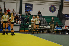 DSC_0229 (BrockportAthletics) Tags: new york college golden university state tournament playoffs volleyball ncaa potsdam eagles framingham clarkson the regionals brockport 2015 sunyac