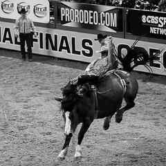 02468715-71-NFR 2015 Bareback Riding-4-b&w (Jim would like to get on Explore this year) Tags: blackandwhite horse usa sports america cowboy december lasvegas places rodeo bucking wrangler 2015 barebackriding nfr thomasandmack