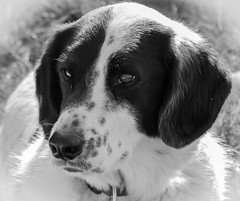 Pamuk (reinerkuentzler) Tags: hund haustier tier pamuk
