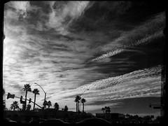 Homeward Before The Gale (MPnormaleye) Tags: trees bw storm southwest weather clouds dark weird moody desert palm utata utata:project=tw501