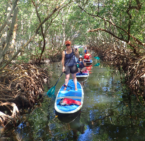 11_29_15 Private Paddle Tour Lido Key FL 07