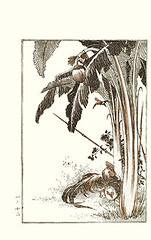 Japanese banana, aster, domestic fowl and Eurasian tree sparrow (Japanese Flower and Bird Art) Tags: flower tree bird art japan japanese book picture banana domestic sparrow fowl eurasian musa asteraceae gallus woodblock aster nihonga passer ichikawa musaceae phasianidae montanus basjoo passeridae readercollection raijiro