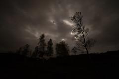 Before .... 1.6 seconds exposure. (PSHiggins) Tags: nikon d600 d610 fx fullframe 35mm 14mm samyang f28 dark moon moonlight trees silverbirch