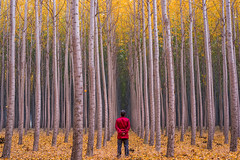 Tree Farm Selfie (Jaykhuang) Tags: boardmantreefarm trees polartree morning oregon fallcolors autumn selfie 2016 october