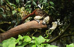Mico curioso. (manuelbarrera2611) Tags: animal naturaleza salvaje parque zoologico mono mico titi cabeza de algodn