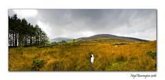 Slievenamon Bog Panorama 1 Nigel Borrington 2016 (nigelborrington) Tags: tipperary slievenamon ireland nigel borrington irish landscape nikon d7200