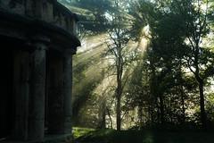 Foggy Bismarck (sffbigmac) Tags: tree baum forest wald sunray sonnenstrahlen fog nebel morning morgen sun sonne