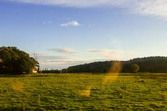 IMG_42427 (David Falck) Tags: train window skne scenery country field tree moving fast