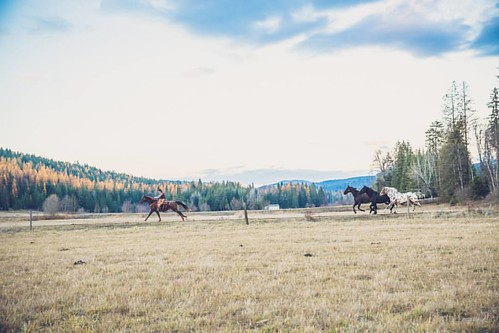 """You can ride him as fast as he can run."" -Larry Smith  #wpguestranch #duderanch #guestranch #run #ride #visitidaho #upperleft #upperleftusa #rideboldlyride #visitpnw #idahoexplored #idahome #idaho_daily #n40life #beautifuldestinations #pnwtravel #pnw  Ph"